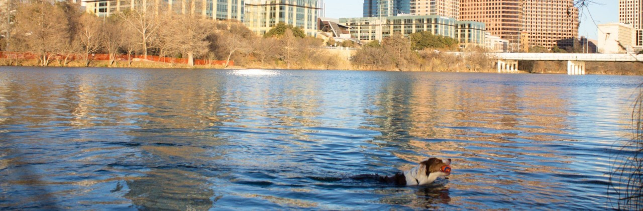 Auditorium Shores Gets a Makeover – Life Goes On