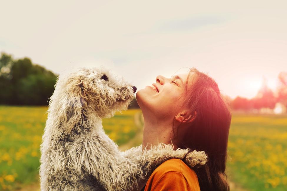Image result for dog man friendship