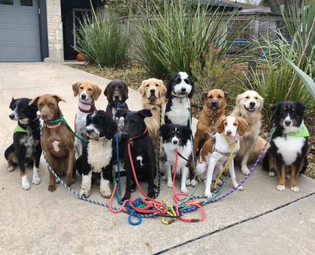 Dog Training img