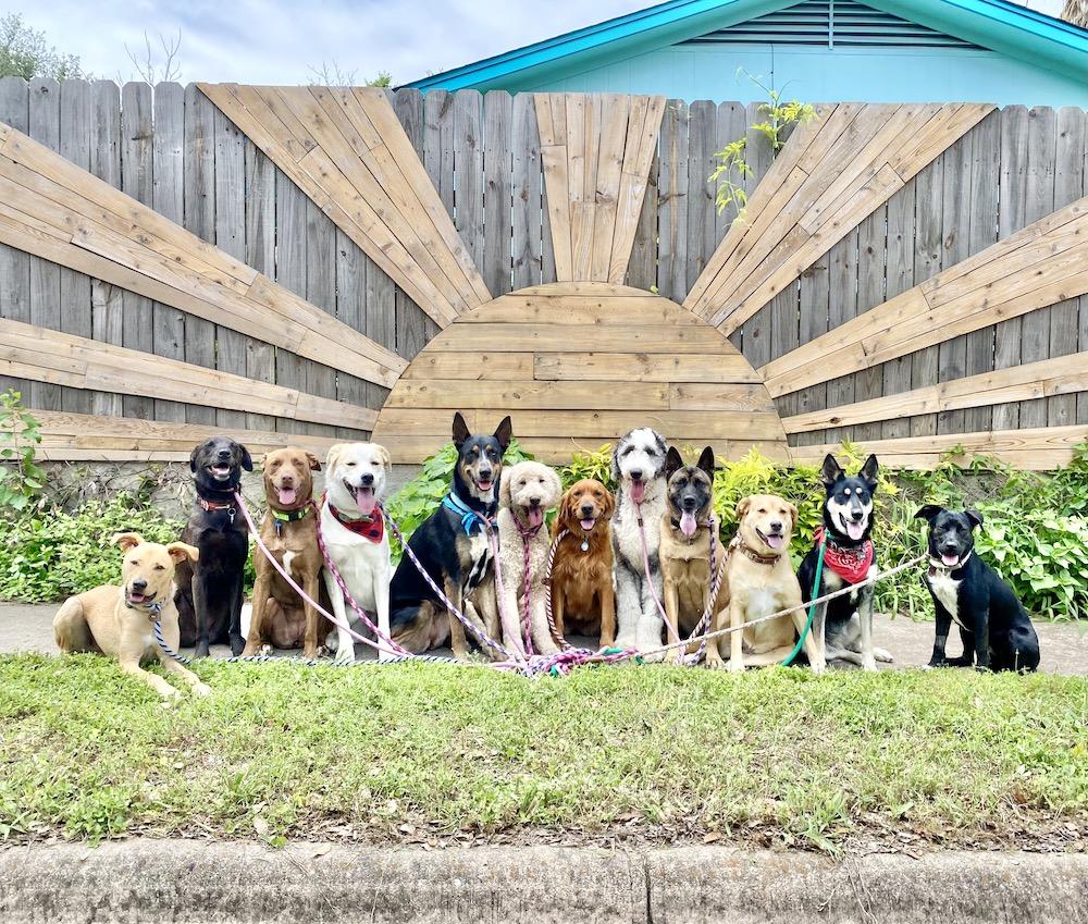 walk atx happy dogs